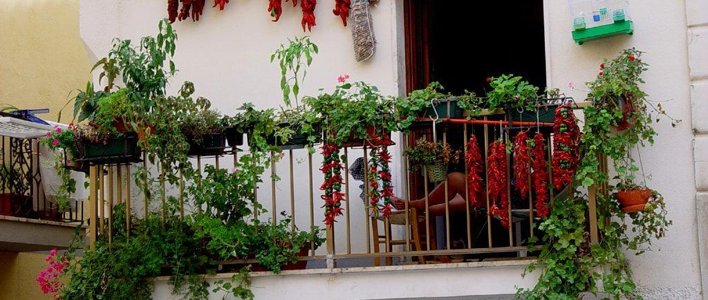potager de balcon3